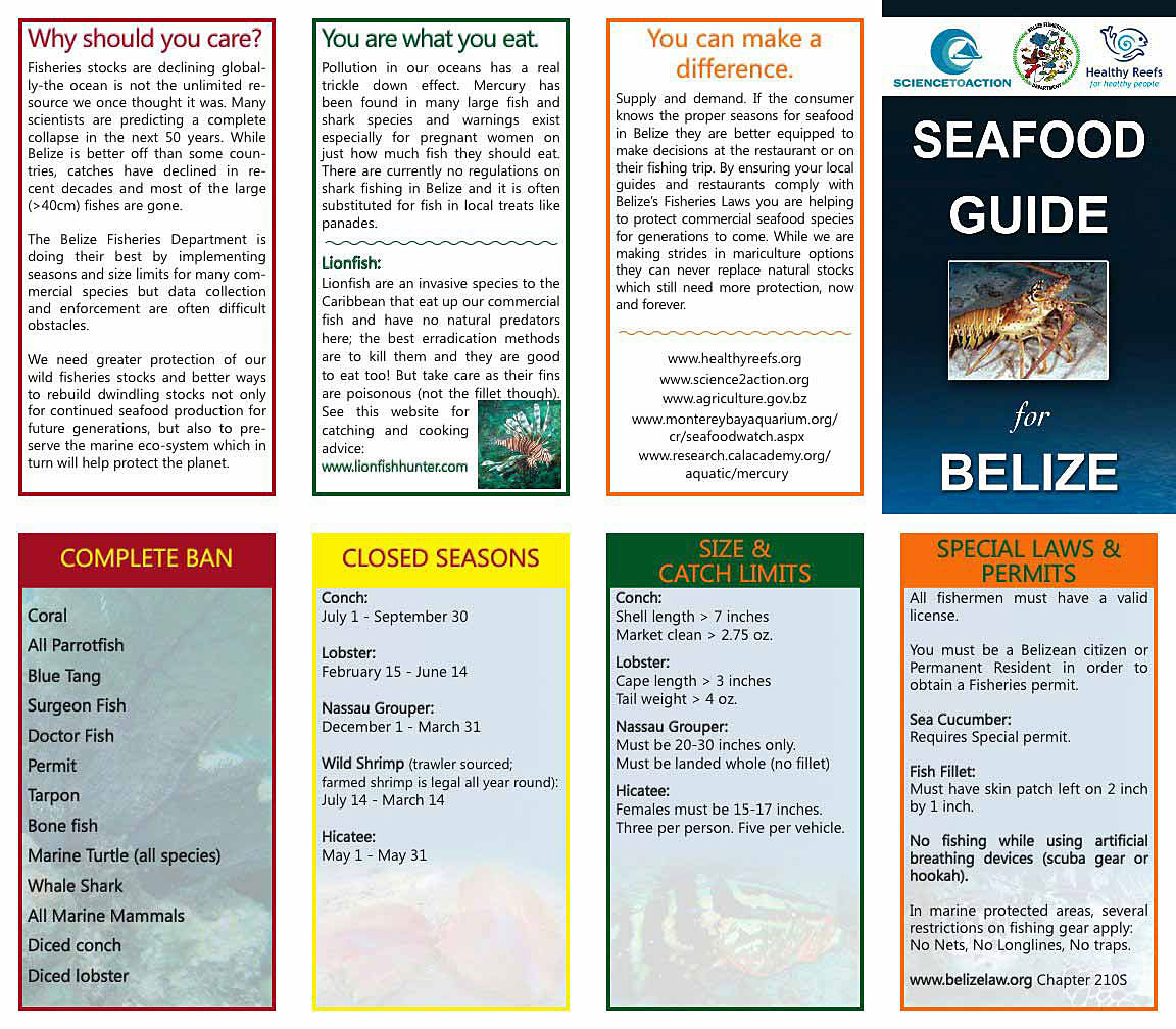 official-guide-belize-fishing-species-closed-seasons-opti