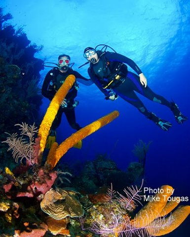 belize-barrier-reef-diving