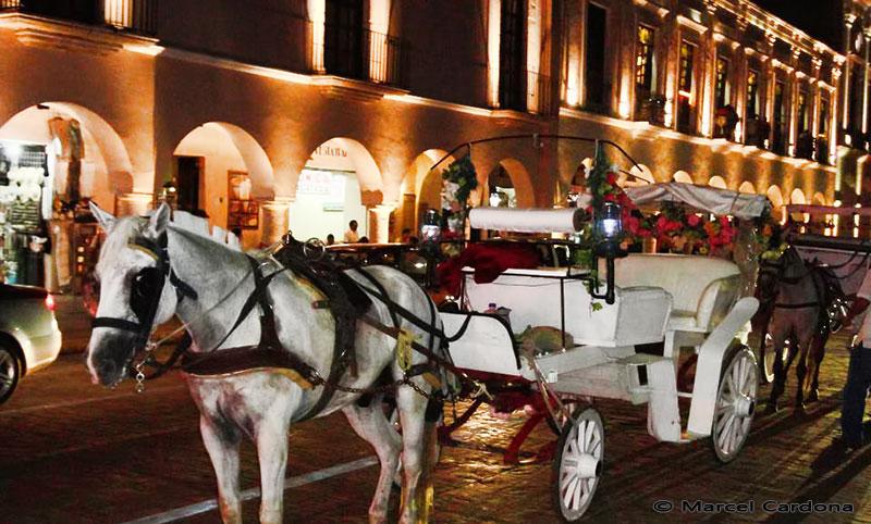 Horse and cart merida, yucatan